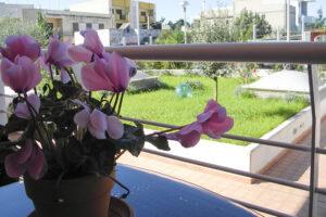 b-e-b-domus-apulia-bitonto-puglia-bari-casa-vacanze-accogliente-giardino-Bari-bed-and-breakfast